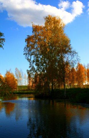 Кострома. Музей деревянного зодчества .Пруды в музее. Автор Светлана Павлова