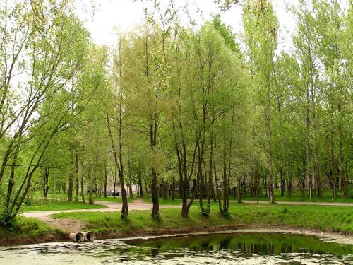 Кострома. Волгореченск .Пруд